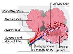 Respiratory System: TEAS || RegisteredNursing org