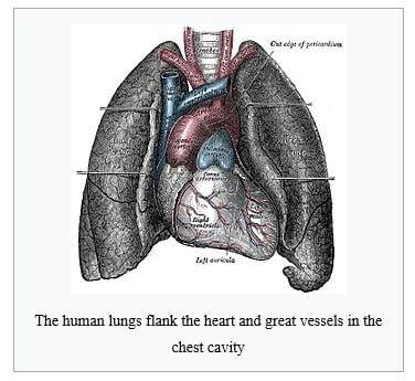 Respiratory System Teas Registerednursing
